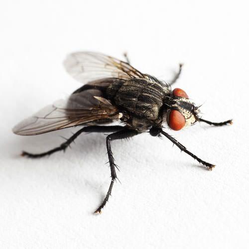 Pest Control Blog Guardian Pest Solutions