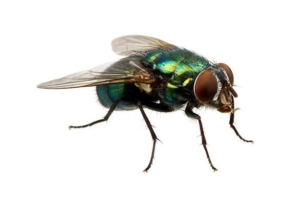 Pest Control Blog | Guardian Pest Solutions
